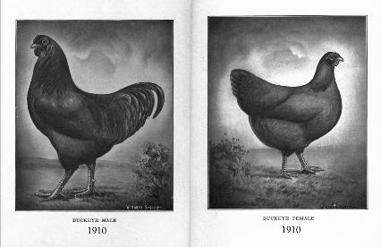 1910 Buckeye rooster and hen